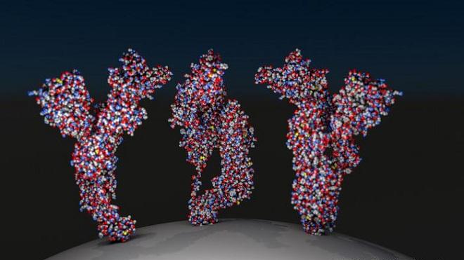 Cần bao nhiêu kháng thể để miễn dịch với coronavirus?
